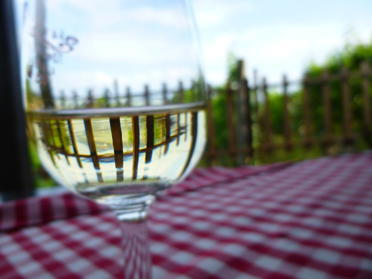 sauvignon blanc-vinho