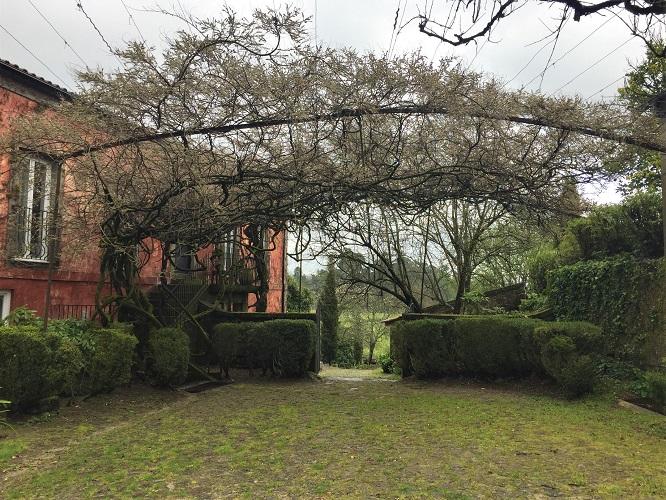 Quinta do Ameal Paisagem