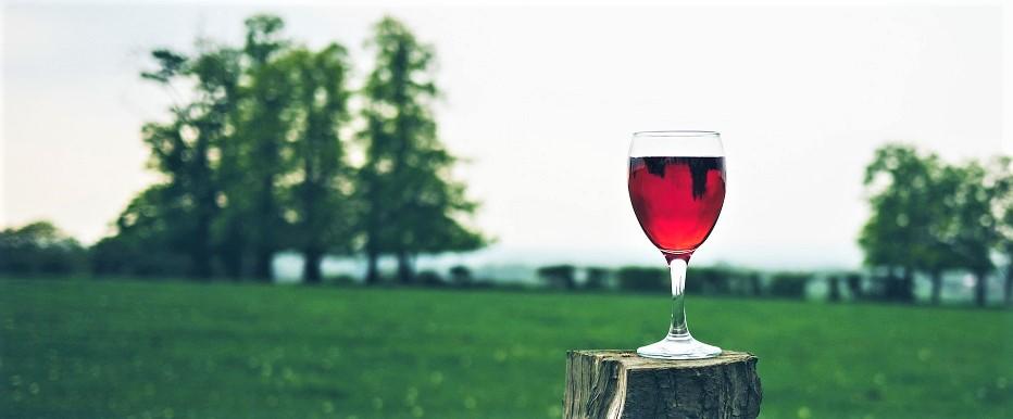 Vinho, sustentabilidade, poluição