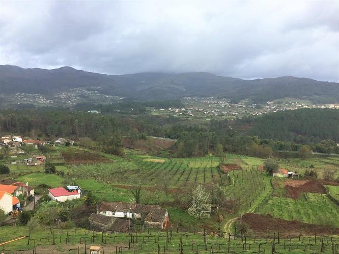 Quinta de Soalheiro vista
